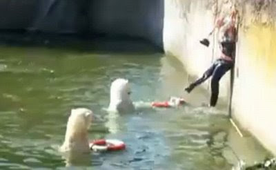 Have a Great Day!!! Video Polar Bear attack women at