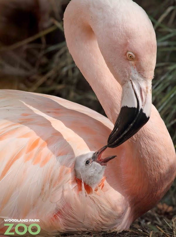 Pet Supplies Orderly Poop Off Bird Clean Up Liquid Ready To Use Spray Bird Supplies