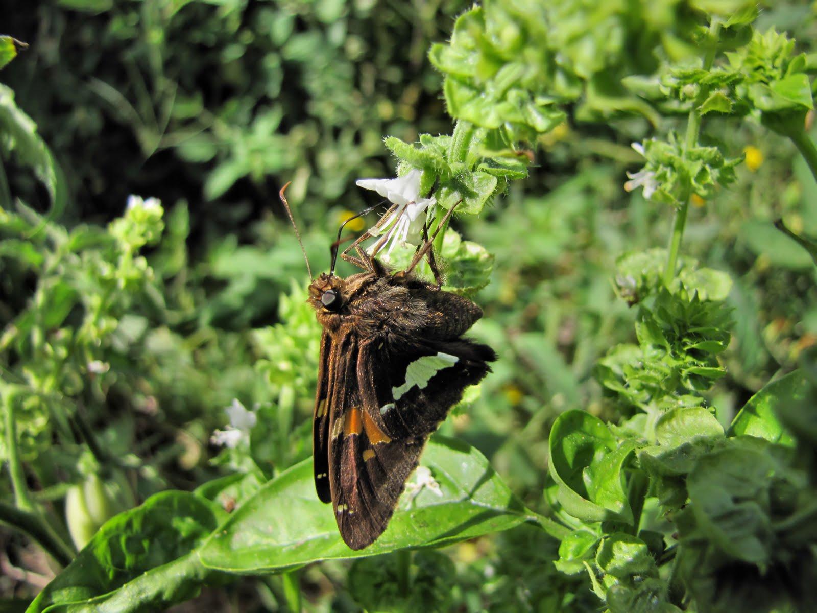 Weekends with the Birds: Backyard Bugs in Delaware