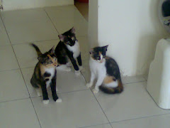 3 ekor anak bulus