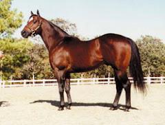 CORONA CARTEL SI-97, $557,142