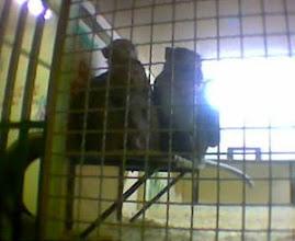 Bezárt állatok