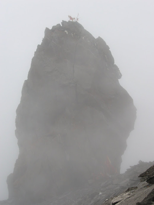 Lord Shiva in Himalya