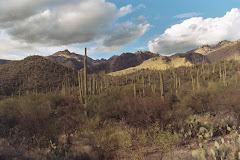 January in Sabino Canyon
