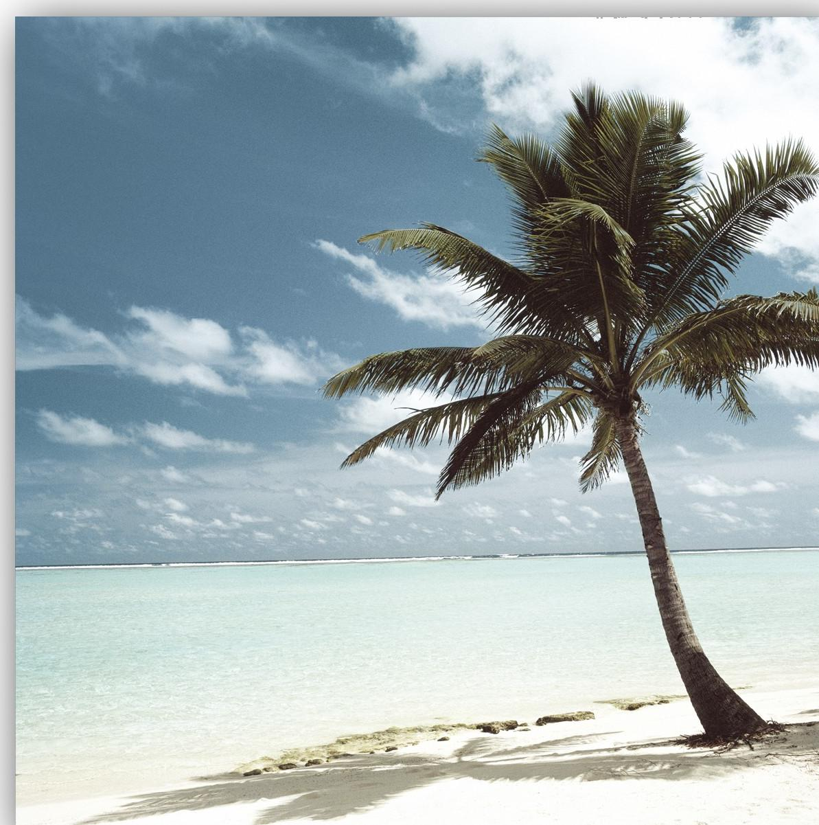 Deserted Island Beach: Palm Tree: From The Bahamas