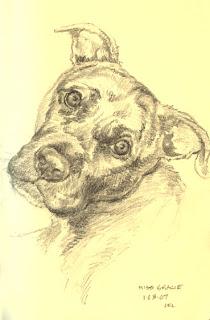 Pit Bull Pet Portrait