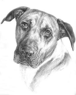 Graphite Dog Portrait