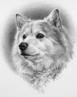 dog portrait by Levin