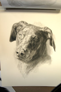 pet portrait by Lori Levin