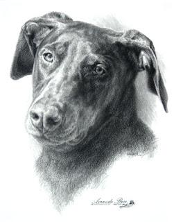 pet portrait by Levin