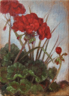 Geraniums by Lori Levin