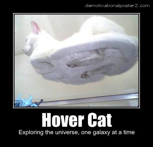 HOVER CAT - motivational poster