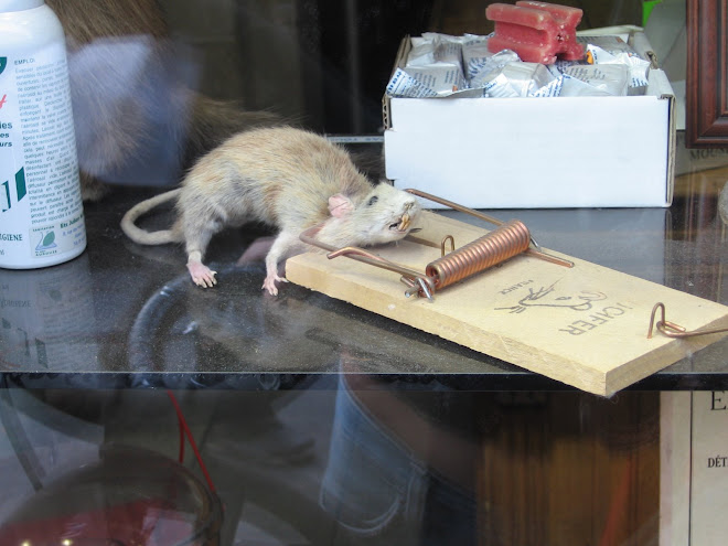 Ratatouille 04