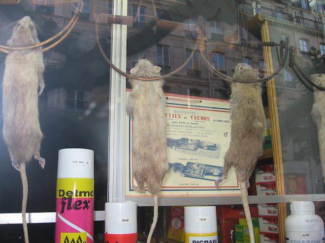 Ratatouille 05
