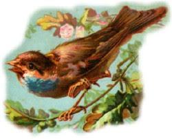 مانند پرنده باش