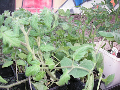 planting a garden, start with seedlings