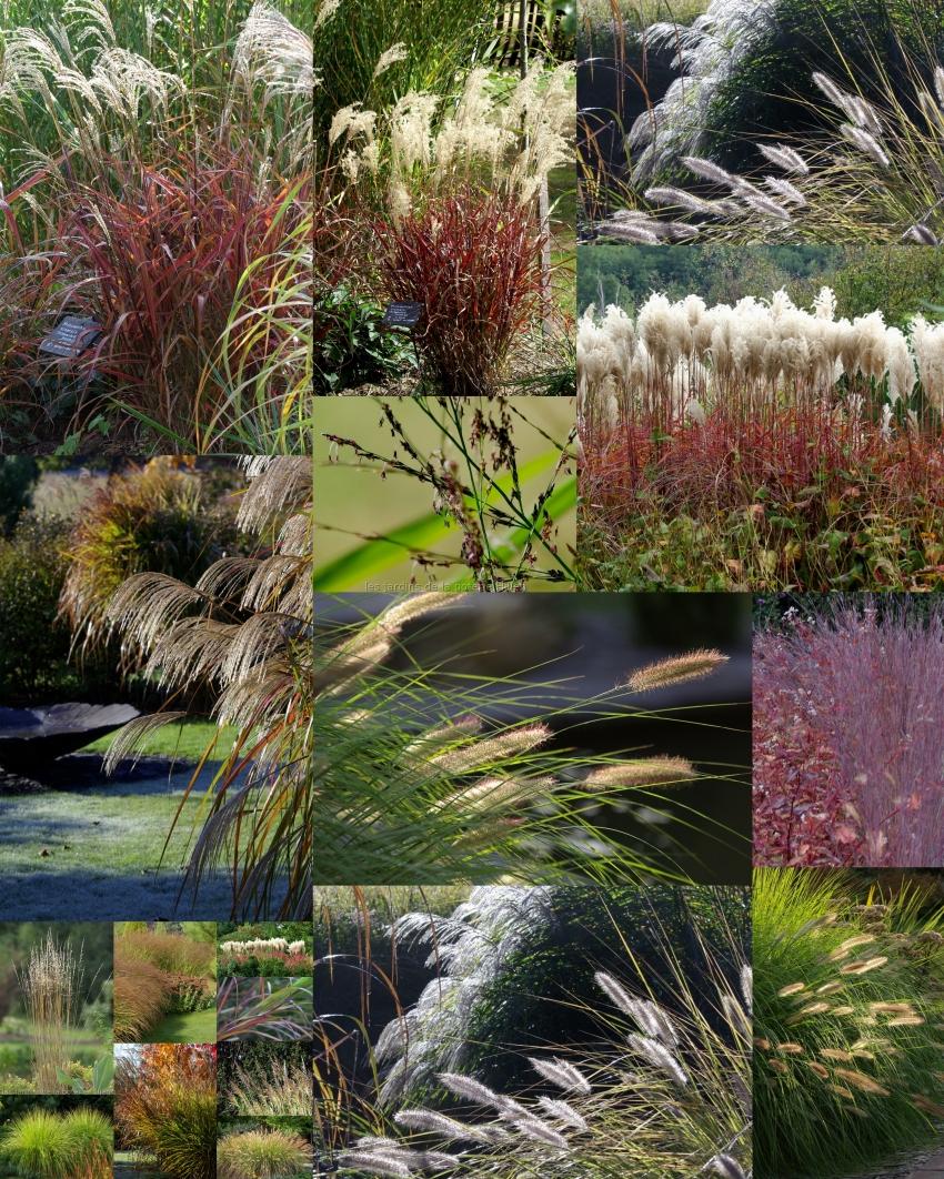Les jardins de la poterie hillen qu 39 est ce qu 39 une gramin e - Jardin de graminees photos ...
