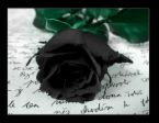 black rose i think is the symbol of my tiny little life... some time gud and some time bad.