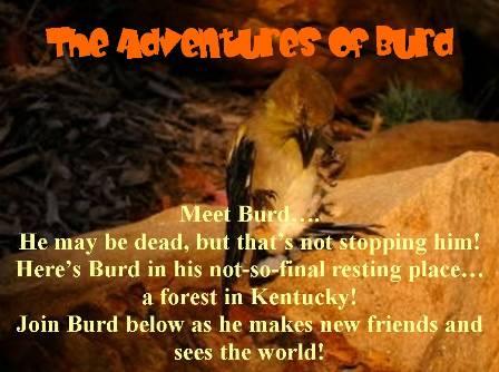The Adventures of Burd