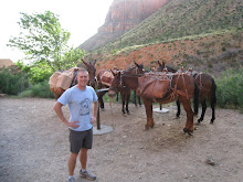 Me and some Mules at Indian Gardens