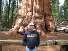 General Sherman: The Largest Living Thing in the World