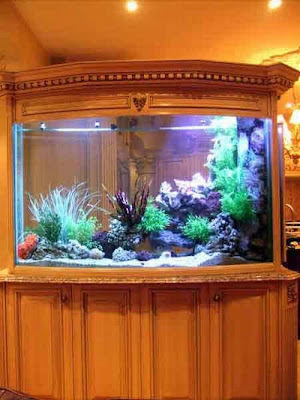 50 Beautiful Fish Aquarium Designs Kerala Home Design
