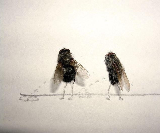 Brincando de moscas mortas