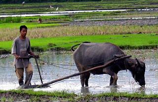 Pertanian Organik Karawang Jawa Barat