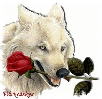 wolf with rose1