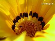 Pétalos de flores mustias
