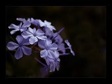 Ella es violeta...