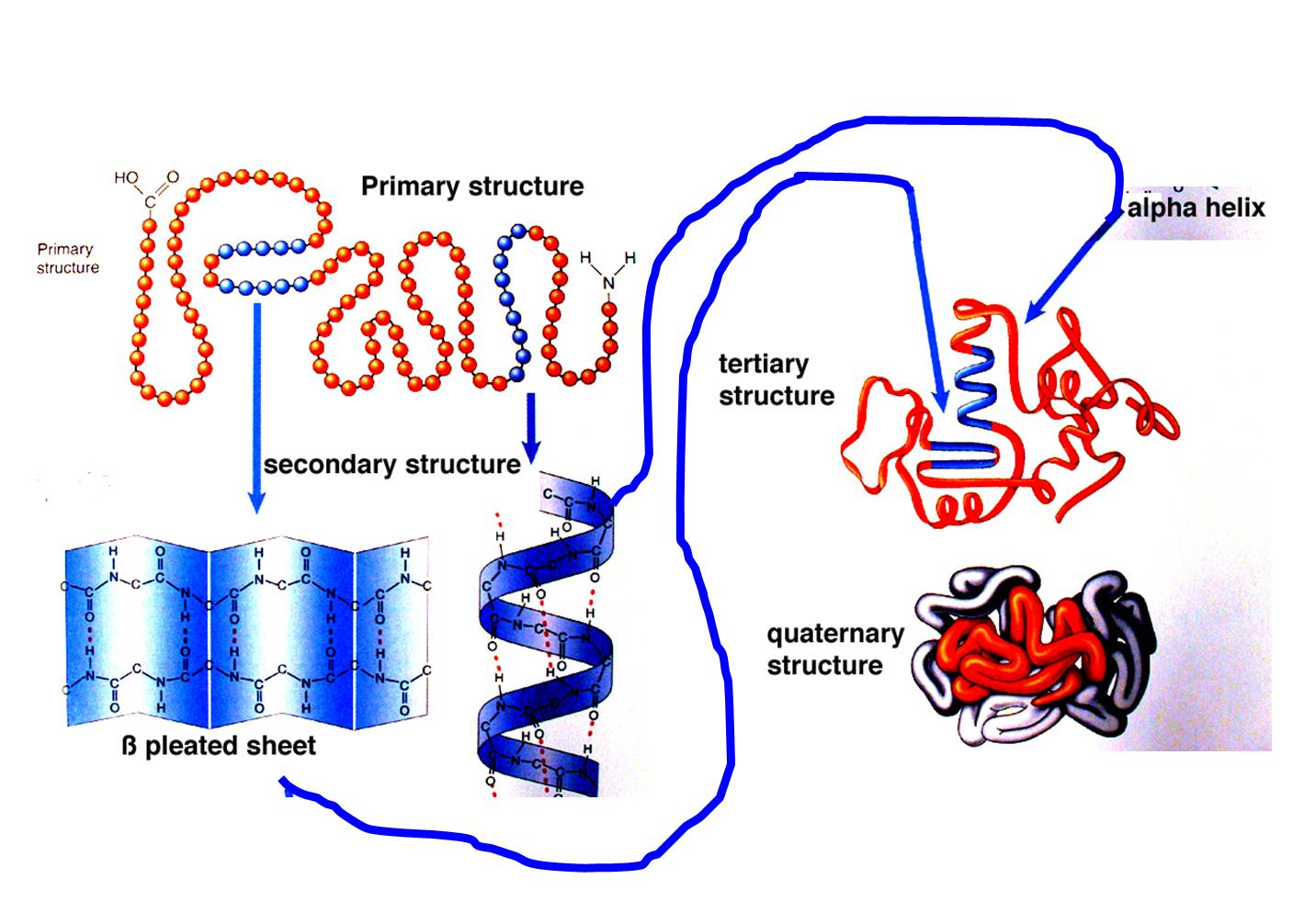 Peptide Structure Diagram Simple E30 325i Wiring Biochemistry 208 University Of Limpopo Chapter 2