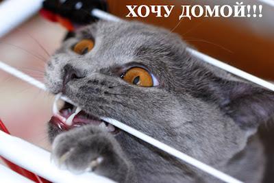 Funny Cat (Funny Pics)