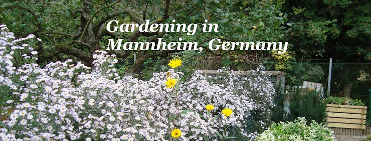 Gardening in Mannheim, Germany