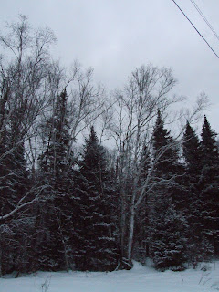 this is a photo of winter in Canada that was taken December 2007