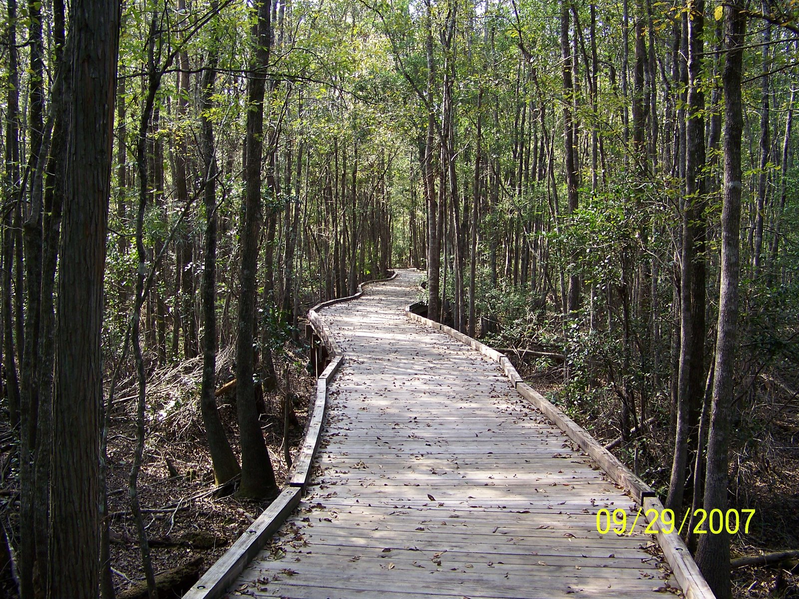 the okefenokee swamp The okefenokee swamp by: steve mcdonald located in the okefenokee national wildlife refuge, the okefenokee swamp park is a convenient point of entry and a magnificent.