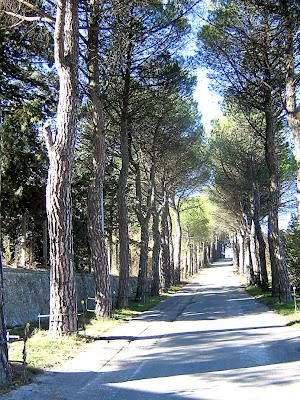 Campobasso, viale, alberi, strada