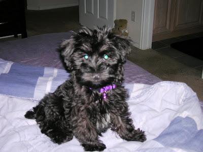 Snoop Puppy Pup!!