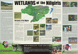 Wetlands of the Nilgiris
