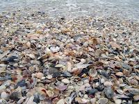 conchas da praia
