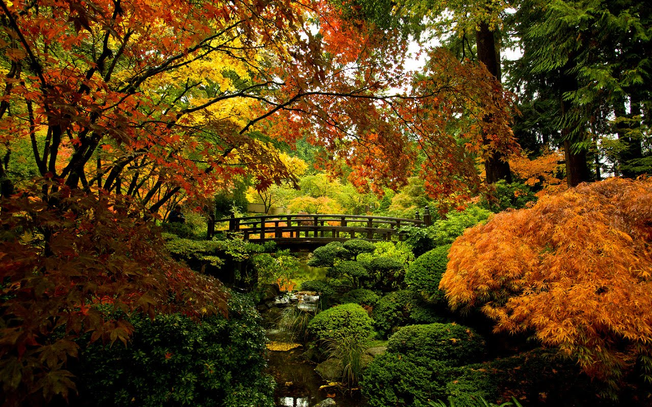 Japanese Garden Wallpapers: Dear Alisha: It's Autumn Time, It's Autumn Time