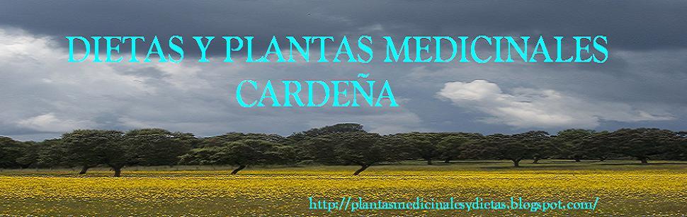 PLANTAS MEDICINALES CARDEÑA