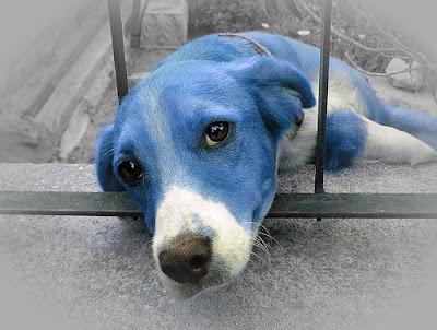 Perro+azul+poema.jpg