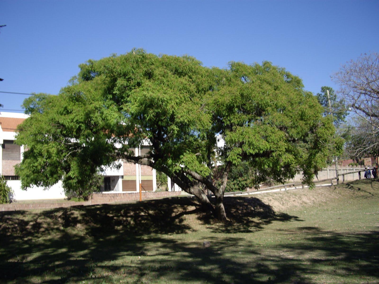 V e r d e c h a c o timb blanco for Arboles perennes en argentina