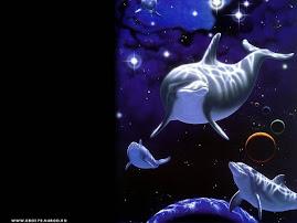 delfini nello spazio