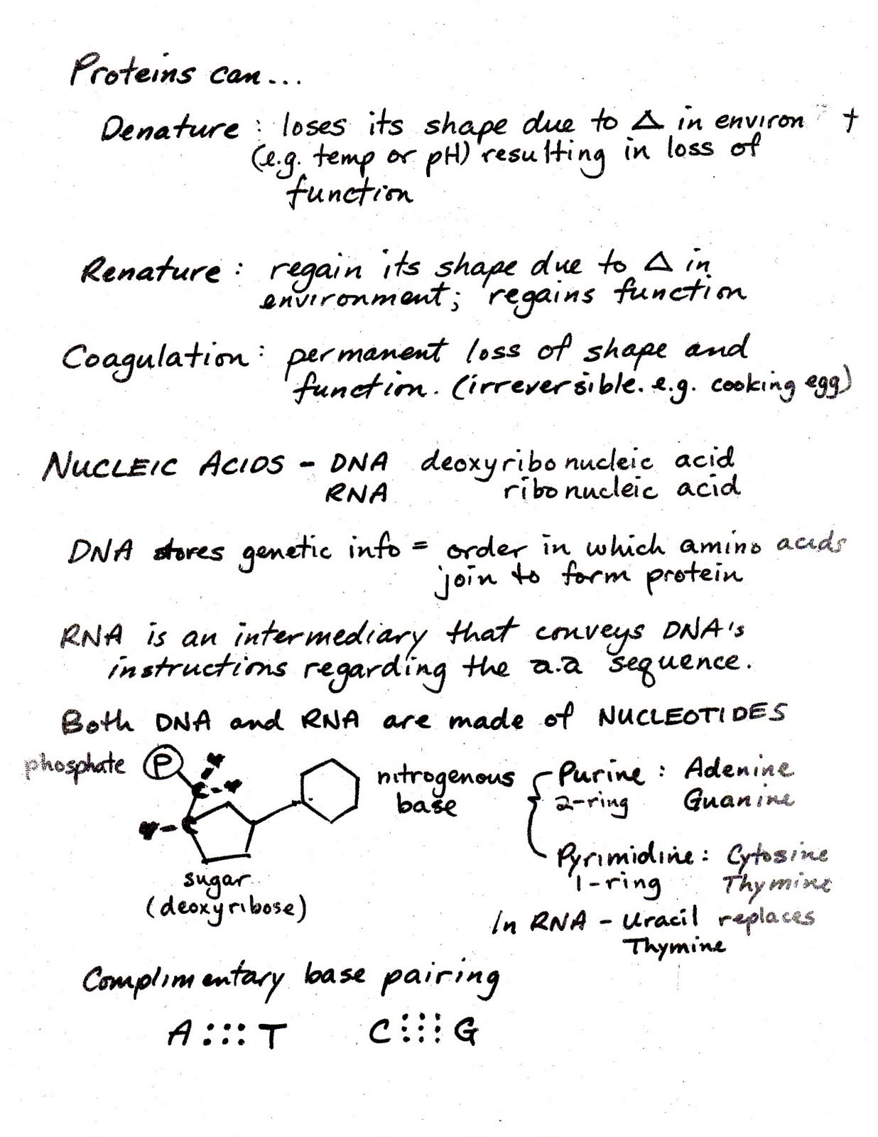 The Bioblog Bio Sheets 12 17 Carbohydrates Lipids