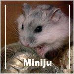 Miniju