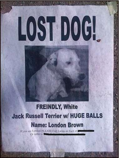 Toronto Dogs Directory: Some Funny Posters And Signs