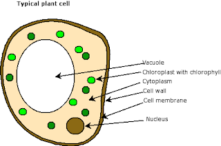A Cell Story A Day: How did the chloroplast get its name?