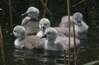 I piccoli dopo aver lasciato il nido